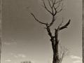 Baum 02